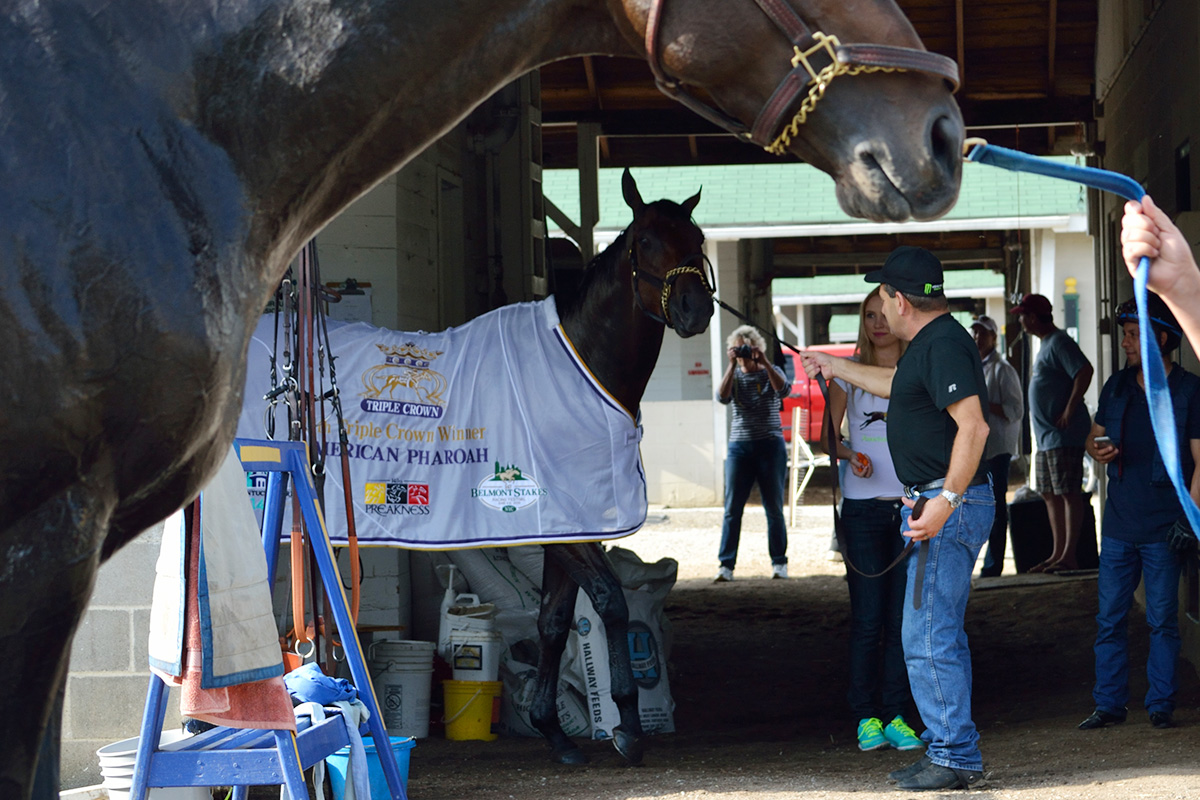 American Pharoah walks the shedrow
