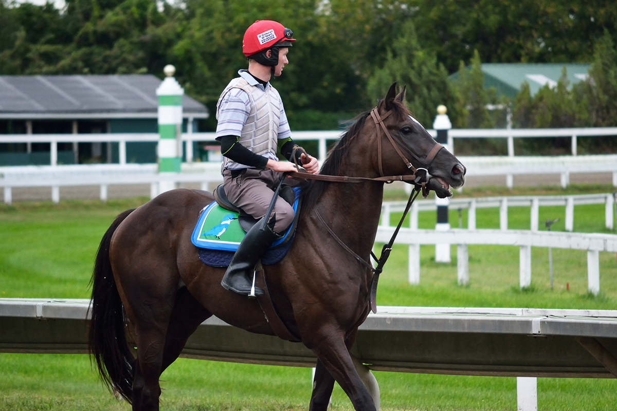 Horse training at Suffolk Downs on September 4, 2015