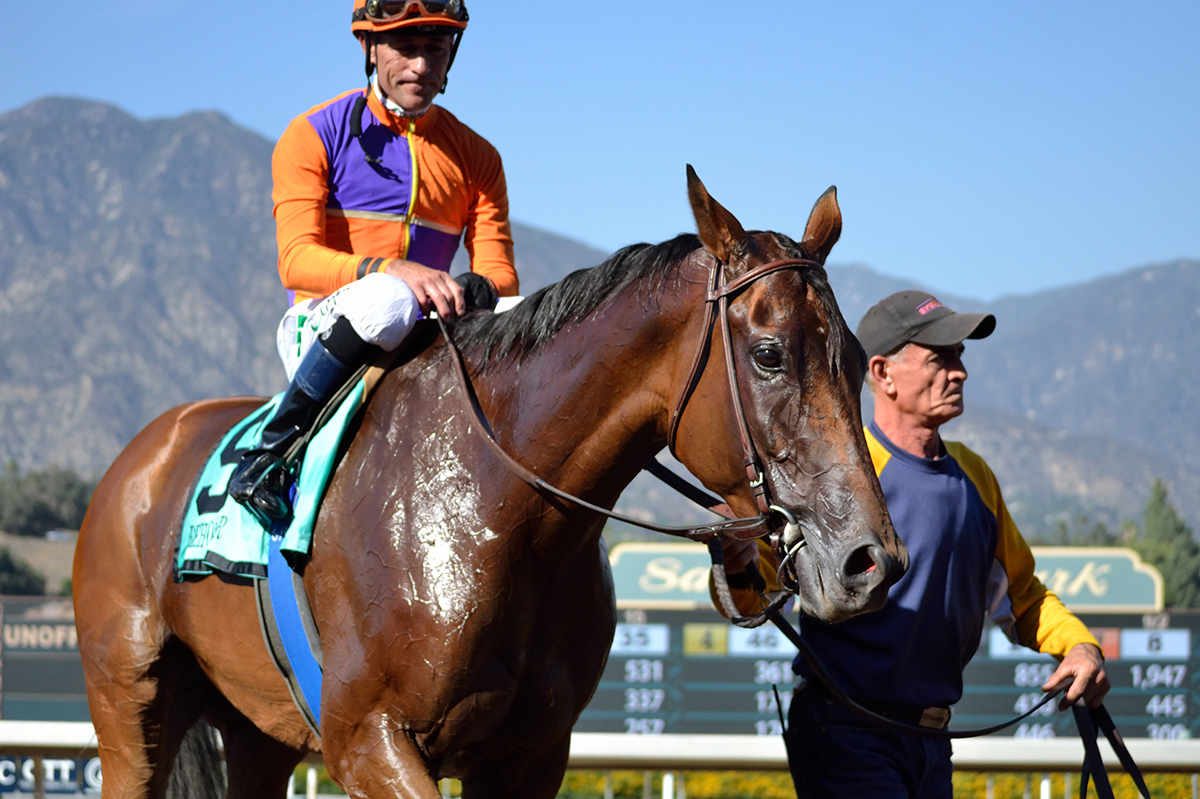 Beholder circles on the Santa Anita track as she waits to enter the winner's circle after the Zenyatta Stakes