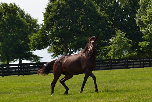 Rachel Alexandra in her paddock at Stonestreet Farm in May 2012