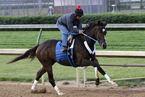 Rachel Alexandra works at Churchill Downs, May 10, 2010
